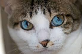 Resultado de imagem para gatos e cores
