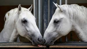 <b>Dancing</b> with horses: The <b>Spanish</b> Riding School of Vienna