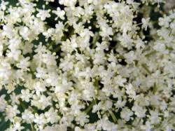 Znalezione obrazy dla zapytania kwiaty czerwca