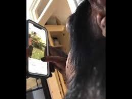 Шимпанзе-пользователь смартфона вызвал бурную реакцию ...