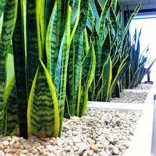 beautiful office plants best light for office
