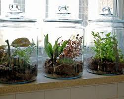Kitchen Herb Garden Design Indoor Kitchen Garden Wonderful Designs Indoor Vegetable Gardening