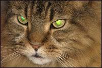 Why Do Animals' Eyes <b>Glow</b> In The Dark? : NPR