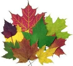 Výsledok vyhľadávania obrázkov pre dopyt jesenný list kreslený