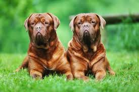 9 of the world's <b>largest dog</b> breeds   MNN - Mother Nature Network