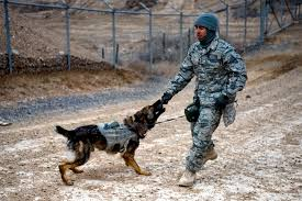 u s department of defense photo essay u s air force staff sgt pascual gutierrez praises edy his military working dog