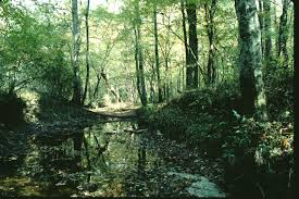 Image result for dutch buffalo creek, cabarrus