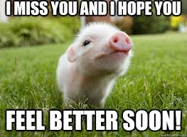 I miss you and I hope you Feel Better Soon! - baby pig - quickmeme via Relatably.com