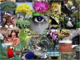 Resultado de imagen para principales problemas ambientales venezuela