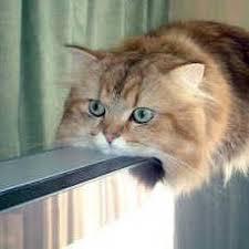 Monorail Cat   Know Your Meme via Relatably.com