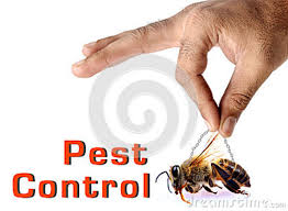 شركة مكافحة حشرات بخميس مشيط Images?q=tbn:ANd9GcQQVnTx90nNDuaoD6yj4C0TOUhCoaGIusdxU6JXFnTqqDKP2kkf