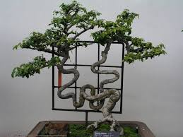 1000 images about bonsai baby on pinterest bonsai trees bonsai and bonsai forest bonsai tree interior