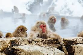 heidi rebecca celeste kraay notes dad loved monkeys like this red faced meditating beauty photo matthew kane