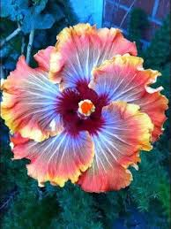 Image result for flower