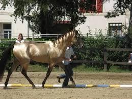 """Résultat de recherche d'images pour """"images chevaux akhal tékés"""""""