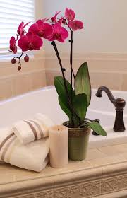 day orchid decor: deep purple orchid brings life to bathroom