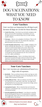 best ideas about dog vaccinations dog health dog vaccinations everything you need to know