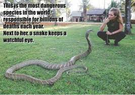 FunniestMemes.com - Funny Memes - [This Is The Most Dangerous ... via Relatably.com