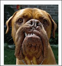 """Résultat de recherche d'images pour """"emoticones chien et mollet"""""""