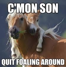 Top 5 Horse Memes | Horsemart via Relatably.com
