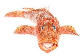Resultado de imagen de imagenes de pescados  ,rascacio