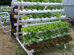 Quer montar uma horta em casa? Então não perca nossas dicas!