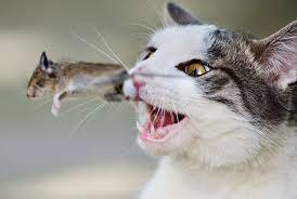Bildergebnis für katz und maus spiel