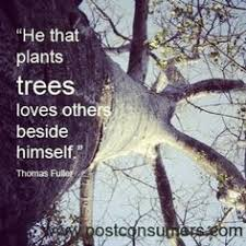 Trees on Pinterest | Orange Trees, John Muir Quotes and Magnolia Trees