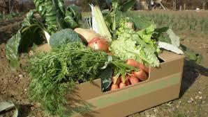 Resultado de imagen de cestas ecologicas verdes