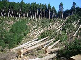 Deforestation Research Papers