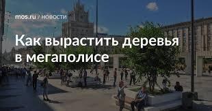 Как <b>вырастить деревья</b> в мегаполисе / Новости города / Сайт ...