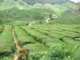 essay about holiday in cameron highland  essay about holiday in cameron highland