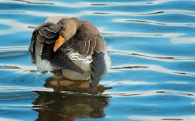 Image result for animals in water