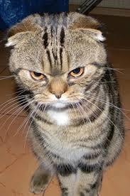 angry cat 2 - caption | Meme Generator via Relatably.com