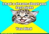 Happy Kitten | Know Your Meme via Relatably.com