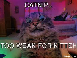 Trippy Cat Meme Generator - DIY LOL via Relatably.com