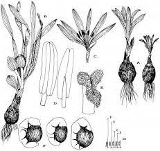 449-531 Atti Approcci floristici e biosistematici nella valutazione