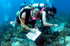 exciting career as a marine biologist classroom to cubicle marine biologists