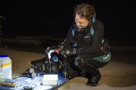 m auml noa new experiments determine effective treatments for box yanagihara collects hawaiian box jellyfish alatina alata