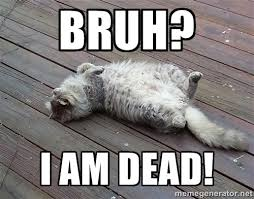 Bruh? I am dead! - Tunafish lazy cat | Meme Generator via Relatably.com