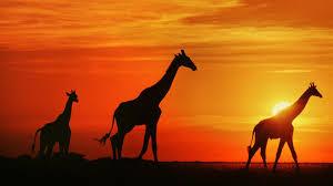 Bildergebnis für südafrika landschaft wallpaper