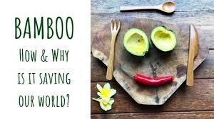 5 Reasons Why <b>Bamboo</b> Is So <b>Eco</b>-<b>Friendly</b> | Bare Vida