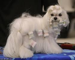 احلى الكلاب لعام 2014 images?q=tbn:ANd9GcQ
