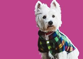 A Begrudging Defense of <b>Dog Clothes</b> Eleanor Cummins Dec 26 ...