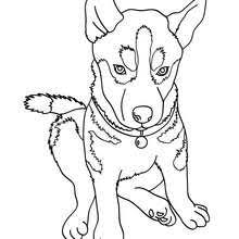 Small Picture Cute dog coloring pages Hellokidscom