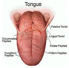 Time Dental near Alton in Hampshire describes why the tongue is the main cause of bad breath