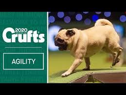 Biggie the <b>Pug</b> wins the Toy Group   WESTMINSTER <b>DOG</b> SHOW ...