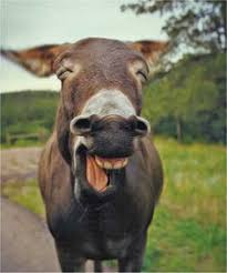 Image result for images of donkeys monkeying around