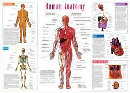 printable human anatomy diagram   humandiagram infoprintable human anatomy diagram