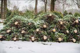 Bildergebnis für Der Weihnachtsbaum